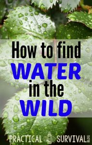 How to find water in the wild. Some good tips in here.